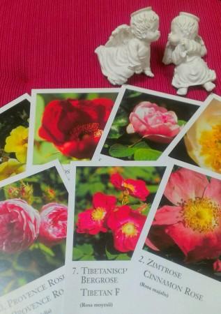薔薇カード